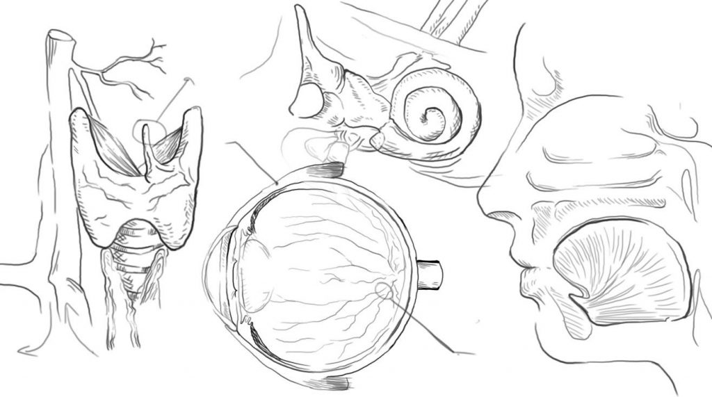 Sketches of anatomy, including cross section of the eye, ear, and head
